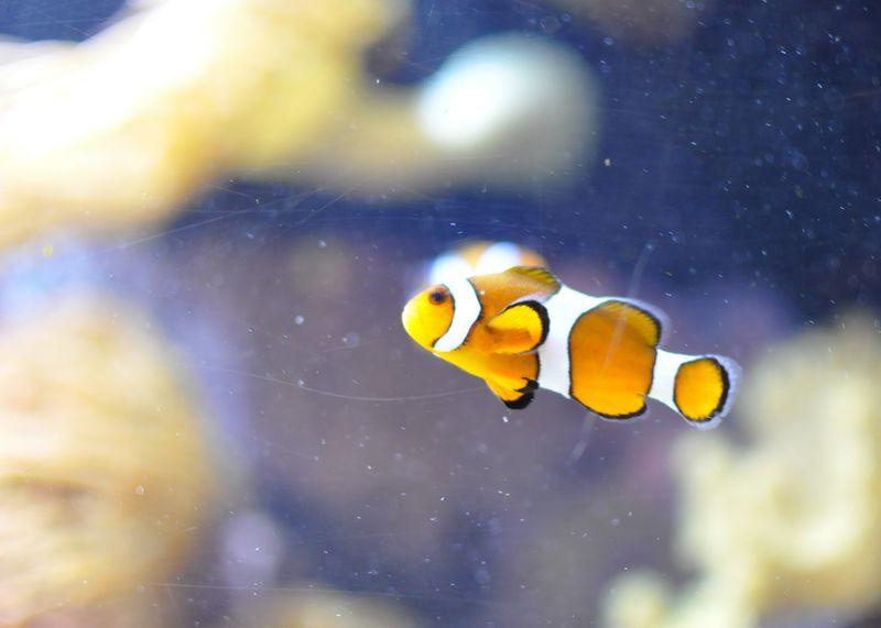 Mystic Aquarium-1