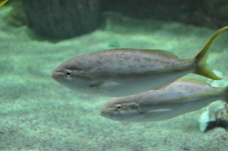 Mystic Aquarium-20