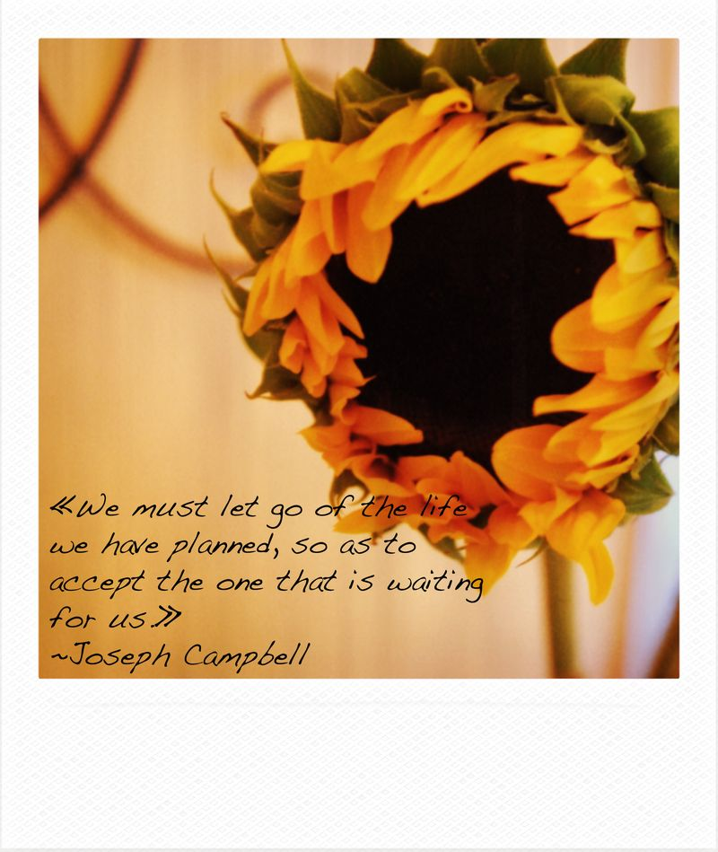 Sunflower with quote