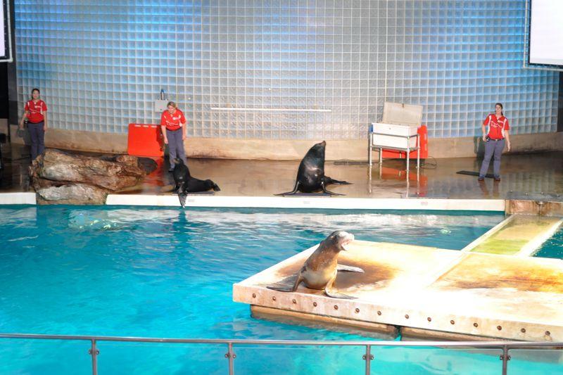 Mystic Aquarium-29