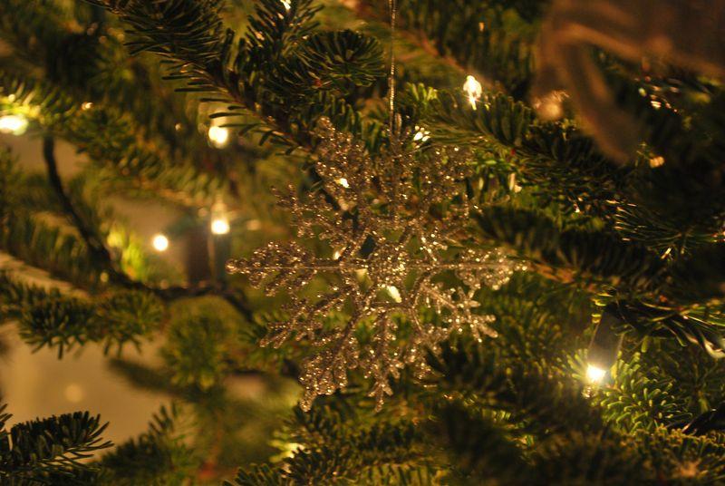 Tree at night-14