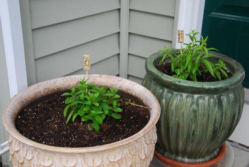 Herbs 2013-3