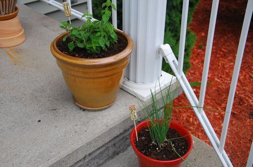Herbs 2013-4