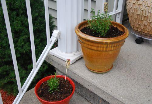 Herbs 2013-2